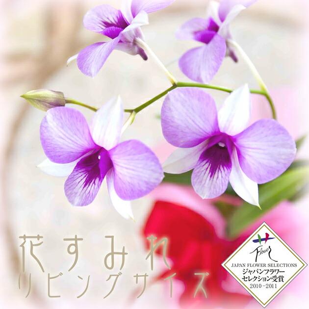 すみれ (モデル)の画像 p1_28
