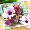 Orchid Bottled Flower : Glass bouquet  【Square】