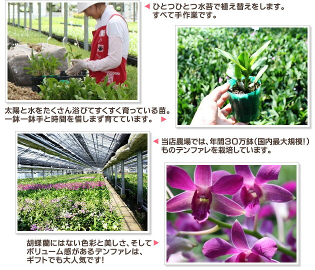 紫罗兰花的画法步骤