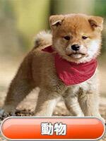 動物カレンダー