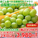 More than grape ♪ large-sized シャインマスカット 3L size 秀品 2 kilos which is edible together with skin from Yamanashi (entering 4 bunches)