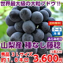 Because it is a refrigeration service, the freshness is the same! The one of the world's largest large drop of grape rarities class which evolved ピオーネ! Seedless wisteria Minoru (wisteria grows) 大房秀品 3L size approximately 1.8 kilos (entering 3 bunches) from Yamanashi