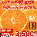 Quirky concentrated fruit juice delicious ♪ super multi ripe three months, Mikan Su products 5 Kg