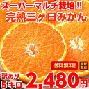 Quirky concentrated fruit juice delicious ♪ super multi ripe mikkabi Mikan John and 5 kg (Hokkaido, Okinawa and some islands are 300 yen)