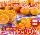 It is hard to obtain it! 5 kg of tree accomplishment full ripeness three days mandarin orange heart (heart) medium size