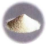 フォカリス菌 粉末