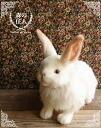 兔子塞动物真实汉萨山野兔