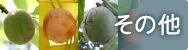 その他の果樹苗木