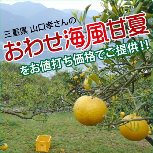 三重県山口孝さんのおわせ海風甘夏