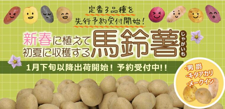 春馬鈴薯3品種