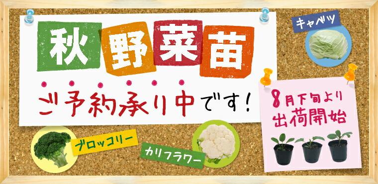 秋の野菜苗ご予約承り中!