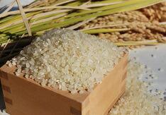 米・穀類専門店「なかの」写真