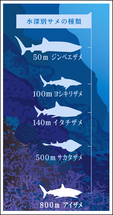 水深別鮫の種類