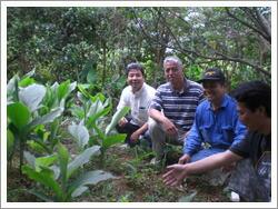 沖縄ウコン農家