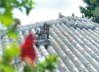 ぬちまーすせっけんの沖縄イメージ写真