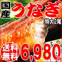 Mother's day father's day gift 2014 presents country in eel Kabayaki eel eel Kabayaki Super oversized 2 tail into Kagoshima Prefecture production * Kabayaki sauce with birthday 内 祝 I congratulate eel 02P05Apr14M
