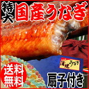 Midyear eel gift present 2014 unagi Kabayaki domestic folding fan with 1 tail (approx. 230 g ~ 250 g) eel 1 tail there with eel midsummer ox from oversized Miyazaki Prefecture and Kagoshima Prefecture production * eel
