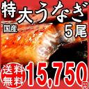 Eel kabayaki gift charcoal fire firing eel kabayaki extra-large 5 dado joint Miyazaki products, sauce eel of the ※ eel kabayaki from Kagoshima from country belonging to