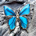 Real butterfly wings * blue * ring-said to be the world's most beautiful morpho-