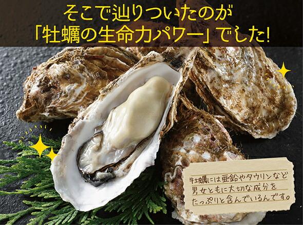 牡蠣の生命力パワー