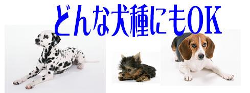 犬種.シャンプー