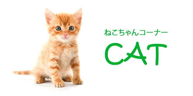 猫用アイテム