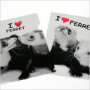 Five pieces of ferret clear file sets