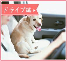 ドライブ編