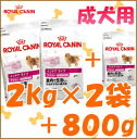Royal Canin mini indoor adult 2 kg × 2 bag +800 g bonus gifts /