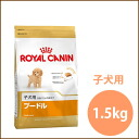 For Royal Canin poodle puppy 1.5 kg and more than 5000 Yen / 10P22Nov13 / in