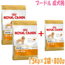 Royal Canin poodle adult dogs for 1.5 kg × 2 bag ( plus 800 g giveaway ) //10P28oct13 /