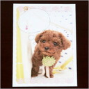Comment post card poodle