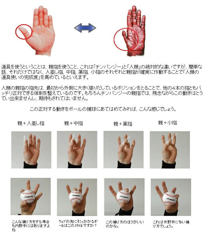 道具を使うということは、親指を使うこと、これは「チンパンジー」と「人類」の絶対的な違いですが、簡単な話、それだけではなく、人差し指、中指、薬指、小指のそれぞれと親指が確実に作動することで「人類の道具使いの完成度」を高めているといえます。   人類の親指の指先は、最初から外側に大きく張りだしているポジションをとることで、他の4本の指ともバッチリ正対できる体制を整えているのです。もちろんチンパンジーの親指では、残念ながらこの動きはとうてい出来ませんし、期待もされてはいません。             この正対する動きをボールの捕球にあてはめてみれば、こんな感じでしょう。       親+小指     親+人差し指  親+中指     親+薬指                                      ウェブの先に引っかかるボールはこのスタイルですか?     こんな捕り方をする場合も内野手にはありますよね     この捕り方のほうがいいのかな。  これは外野手に多い捕り方でしょう。