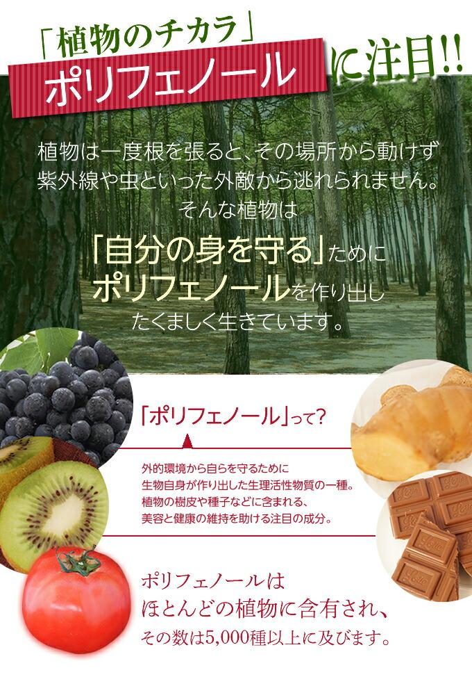 「植物のチカラ」ポリフェノールに注目!!