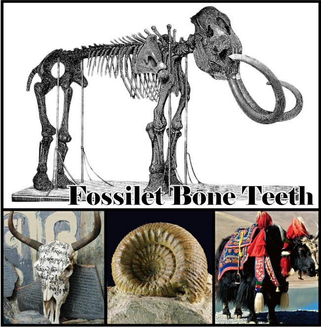 骨化石アクセサリー