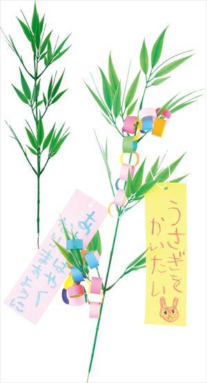 七夕用笹 小(枝笹 55cm) 1565 P12Sep14