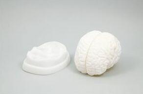 脳解剖模型 9711 P12Sep14