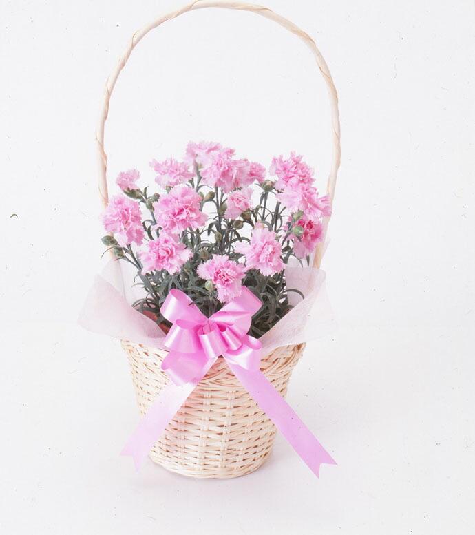 カーネーション ピンク 手付バスケット 母の日 プレゼント