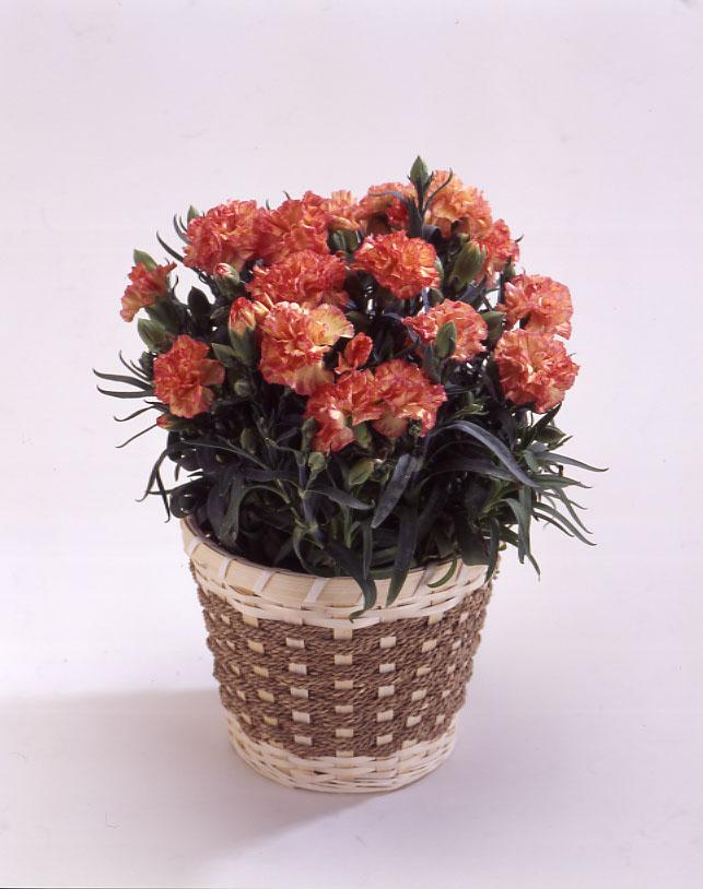 カーネーション オレンジ バスケット 母の日 プレゼント