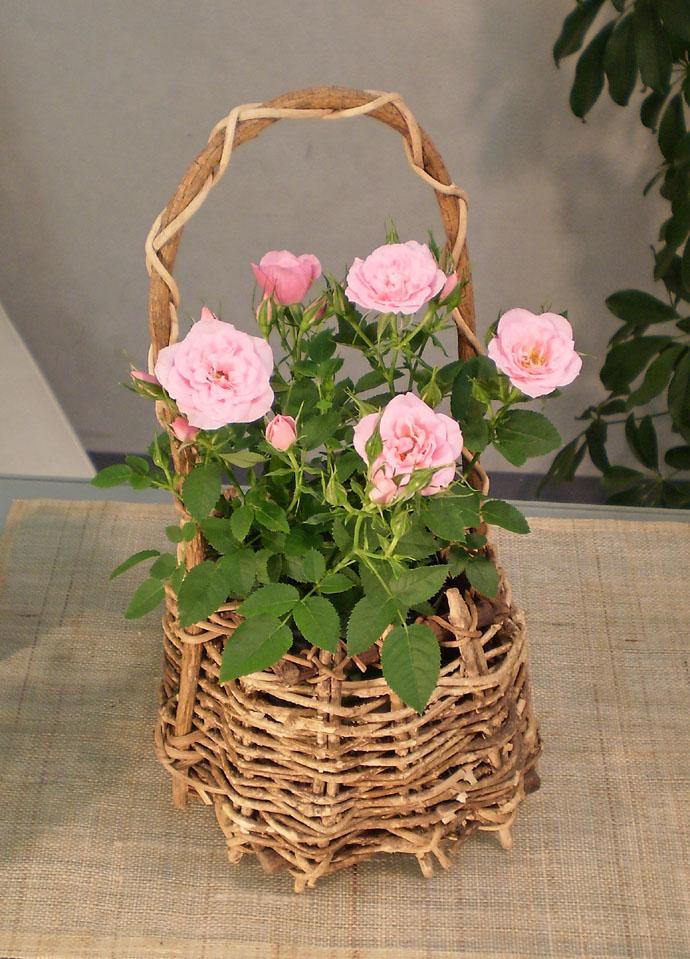 ミニバラ ピンク手付バスケット 母の日 プレゼント