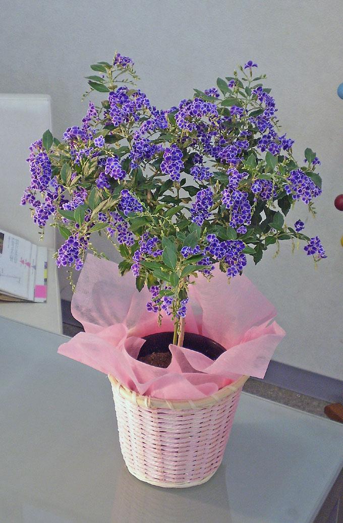 デュランタ宝塚 母の日 プレゼント