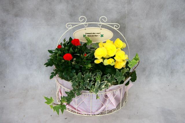 鉢花ハンギングバスケット 母の日 プレゼント
