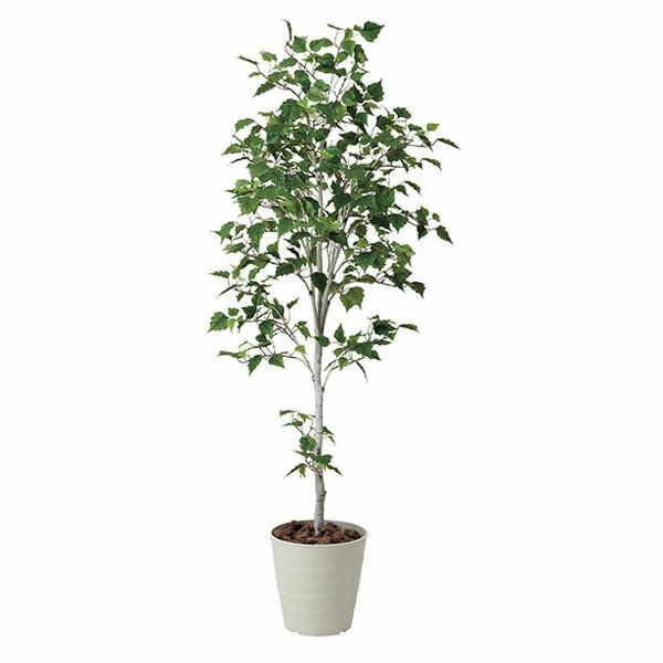 アートフラワー 人工観葉植物 光触媒 光の楽園 白樺シングル1.8 (代引き不可) P12Sep14