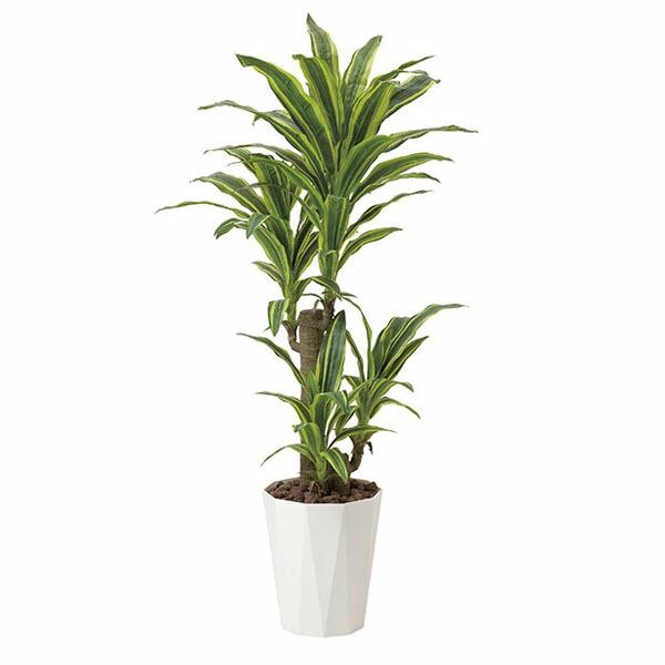 アートフラワー 人工観葉植物 光触媒 光の楽園 フレッシュドラセナ1.25 (代引き不可) P12Sep14