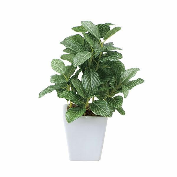アートフラワー 人工観葉植物 光触媒 光の楽園 フィットニアポット (代引き不可) P12Sep14