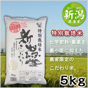 米 日本米 Aランク 産地直送 25年度産 新潟県 特別栽培米 こしひかり 5kg JA直送(代引き不可) P12Sep14