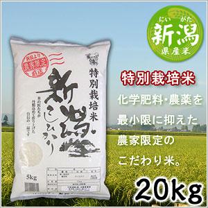 米 日本米 Aランク 産地直送 25年度産 新潟県 特別栽培米 こしひかり 20kg (5kg×4袋) JA直送(代引き不可) P12Sep14