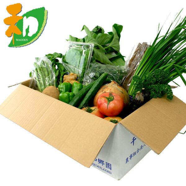 和郷園 野菜ボックス11品目〜12品目 野菜セット 野菜BOX 産地直送 農家厳選(代引き不可)