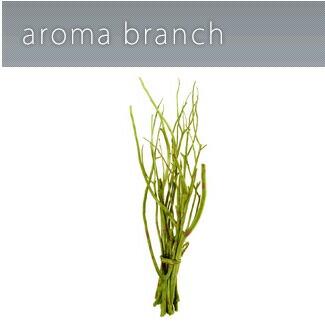 アロマブランチ ブランチ グリーン フレグランスディフューザー アロマ @aroma 天然フレグランス P12Sep14