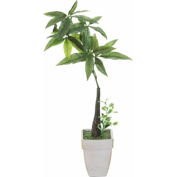 パキラ(造花) 2610−1 P12Sep14